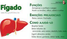 José Fontes | Clínica de Medicina Chinesa [Blog]: Fígado: sinais de possíveis desarmonias