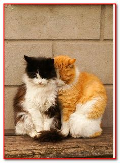 True Unconditional Love: 2 Kitties!