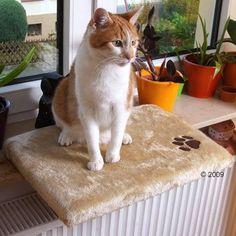 Parapetové odpočívadlo pro kočku