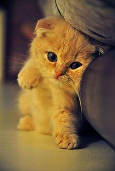 Adorable little kitten
