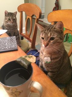 My cats love when I drink tea