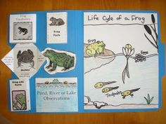 Hearts and Trees: Frog Study Mini Unit and Lapbook PDF