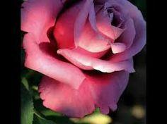 Resultado de imagem para flores con mensajes de reflexion