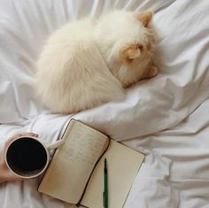 Kitty and book