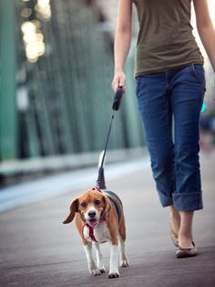 Walking your #dog might seem simple enough, but make sure you are doing it the right way for both of you with these tips. #pets #health
