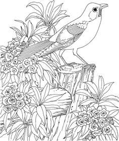 Malvorlagen Für Erwachsene, bild Vogel mit Blumen