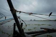 Alex Webb - INDIA. Fort Kochi. 2014. Chinese fishing nets.