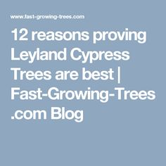 12 reasons proving Leyland Cypress Trees are best | Fast-Growing-Trees.com Blog