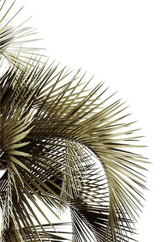 palm fronds | STILL (may jo hoffman)