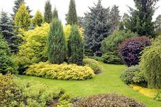 Large Garden With Shrubs And Evergreen Trees : Evergreen Trees For The Garden