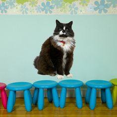 Movable cat sticker