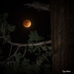 Photographer Ryan Watamura captured this amazing photo of the total lunar eclipse on April 2014 from Grant's Grove in Kings Canyon National Park in California using a Canon EOS camera, IS II, Canon flash with a CTO gel. Lunar Eclipse Pictures, Eclipse Photos, Night Sky Photos, Moon Photos, Over The Moon, Stars And Moon, Blood Moon Lunar Eclipse, Perry Stone, Shoot The Moon