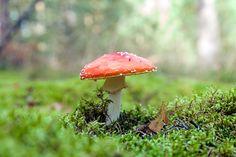 Fly Agaric mushroom Amanita muscaria by Leszek Dudzik on 500px