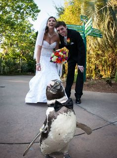 One of my favorite pics from my wedding at the Jacksonville Zoo.