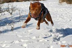 Foto de cão profissional