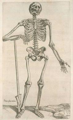 Prima ossium tabula [Human skeleton leaning on a spade]   from Compendiosa totius anatomie delineatio, ære exarata per Thomam Geminum ([1545])