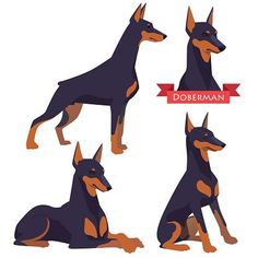 The Doberman Pinscher is among the most popular breed of dogs in the world. Known for its intelligence and loyalty, the Pinscher is both a police- favorite bree Doberman Pinscher Blue, Doberman Dogs, Doberman Tattoo, Puppy Drawing, Dog Logo, Animal Books, Dog Art, Dog Clip Art, Animal Design
