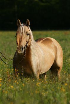 OT Taris Dun It, Quarter Horse