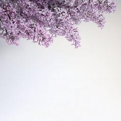 Details. #floweroftheday #photostyling #morningslikethese #thatfirstfeeling   by Andreea Robescu