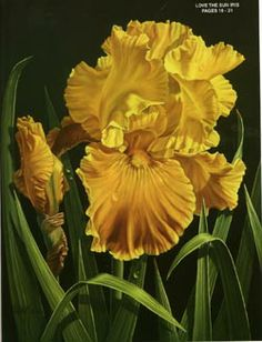 realistic techniques by judy sleight - Google Search