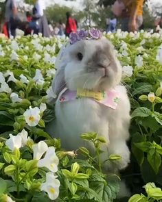 "Rabbit for Easter? Rabbit Cage Size Calculator - "" You are in the right place about trends ideas Here we offer you the most beautiful pictures ab - Cute Little Animals, Cute Funny Animals, Cute Baby Bunnies, Cute Babies, Fluffy Cows, Cute Animal Videos, Animals Beautiful, Animals And Pets, Animal Pictures"