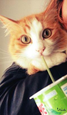 drinking some green tea