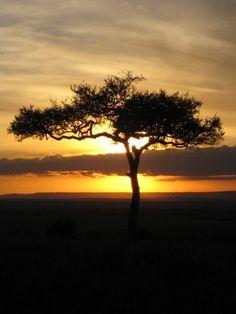 Safari in Masai Mara, Kenya