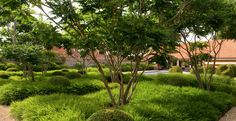 Landscape Focused: Tom Stuart-Smith's gardens from summer to autumn...