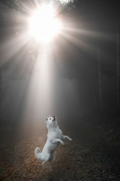 National Geographic Your Shot Cute Puppies, Cute Dogs, Dogs And Puppies, Doggies, National Geographic, Cat In Heat, Wolf Spirit Animal, Wolf Love, Wolf Pictures
