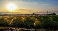 Sunrize Irrigation Fine Art Print Outdoor by septAAOUTDOOR on Etsy