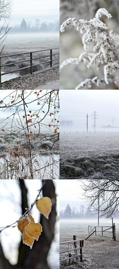 s i n n e n r a u s c h: Wald und Wiese Camera Photography, Travel Photography, Diy Blog, Snow, Memories, Winter, Outdoor, Autumn, Simple Diy