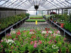 organizando e planejando o jardim