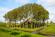 https://flic.kr/p/eNvgEQ | Beemster polder, the Netherlands (Unesco World heritage) | The Beemster is the first so-called polder in the Netherlands that was reclaimed from a lake, the water being extracted out of the lake by windmills. The Beemster Polder was dried during the period 1609 through 1612. It has preserved intact its well-ordered landscape of fields, roads, canals, dykes and settlements, laid out in accordance with classical and Renaissance planning principles. A grid of canals…