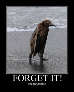 ;( don't leave mr sad bird!