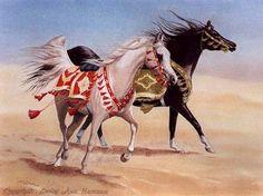 Dual Arabians