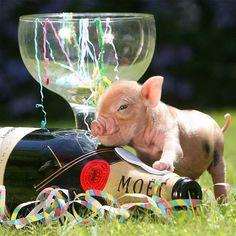 Bueno Legaus: Calendario cerdos enanos