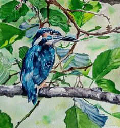 Kingfisher by Dave Percival Bird Paintings, Bird Drawings, Kingfisher, Painting & Drawing, Birds, Artist, Instagram, Paintings Of Birds, Common Kingfisher
