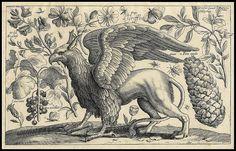 Animalium, ferarum et bestiarum - Griffin -1663 by peacay, via Flickr