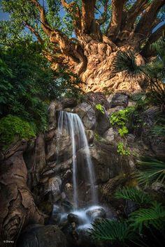 Animal trails at Disney's Animal Kingdom