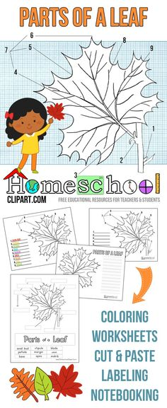 Free Parts of a Leaf Science Notebook Worksheets, Coloring Pages, Labeling Charts, Cut and Paste and More. Preschool Science, Teaching Science, Science For Kids, Science Activities, Science Projects, Steam Activities, Science Experiments, Leaf Printables, Free Printables