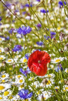 spring, Myddelton House Gardens, Lee Valley Regional Park, Enfield, UK
