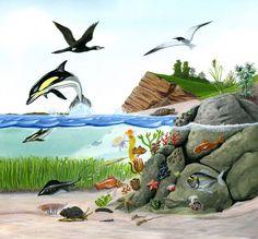 Carlos Velázquez vuelve a demostrarnos la bellleza de la naturaleza en los libros de texto de Ciencias de Edelvives.