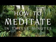 How To Meditate In Twelve Minutes (Guided Meditation & Mindfulness Meditation for Beginners) - YouTube