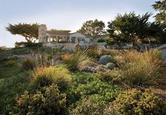 the style saloniste: Fields of Vision: Nature Glorified Monterey garden and landscape designer
