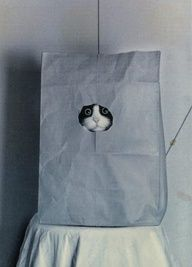 cat in a bag peekaboo cat kitten gorgeous adorable