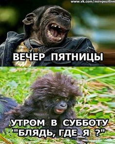 Funny Animal Pictures, Funny Animals, Funny Happy Birthday Images, Female Poets, Russian Humor, Funny Phrases, Just Smile, Man Humor, Funny People