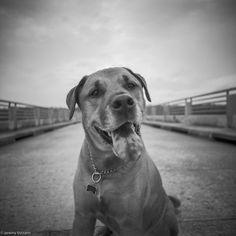 Photo by jeremybizzano. Competition Giveaway, Medium Format Camera, 120 Film, Lomography, Creative Photography, More Photos, Labrador Retriever, Explore, City