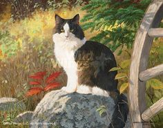 Mischief – Cat Original Painting  by Persis Clayton Weirs  Original acrylic painting by Persis Weirs of a black and white cat named Mischief sitting on a rock in an autumnal landscape