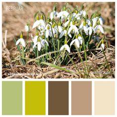 """#Farbpalette """"Schneeglöckchen"""", Vorfrühling,Farbimpression #Frühling, gedeckte Farben, frisch, leicht // © wildpeppermint-design.de"""