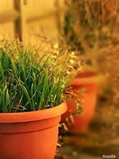 : Garden Plant Pot